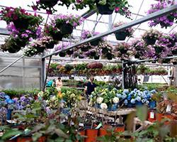 Alcott's Garden Center